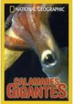 Calamares Gigantes
