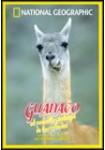 National Geographic : Guanaco El Camello Salvaje De Los Andes