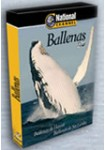 National Channel : Ballenas