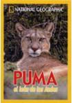 Puma, el León de los Andes