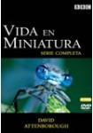 Vida en Miniatura: Adaptandose al aire (David Attenborough)