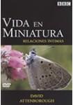 Vida en Miniatura: Relaciones íntimas DVD