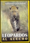 National Geographic : Leopardos al Acecho