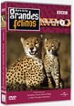 Diario de los Grandes Felinos - Volumen 1