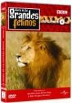 Diario de los Grandes Felinos: Vol. 4
