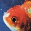 Big Fish Theory: Vince Staples CD